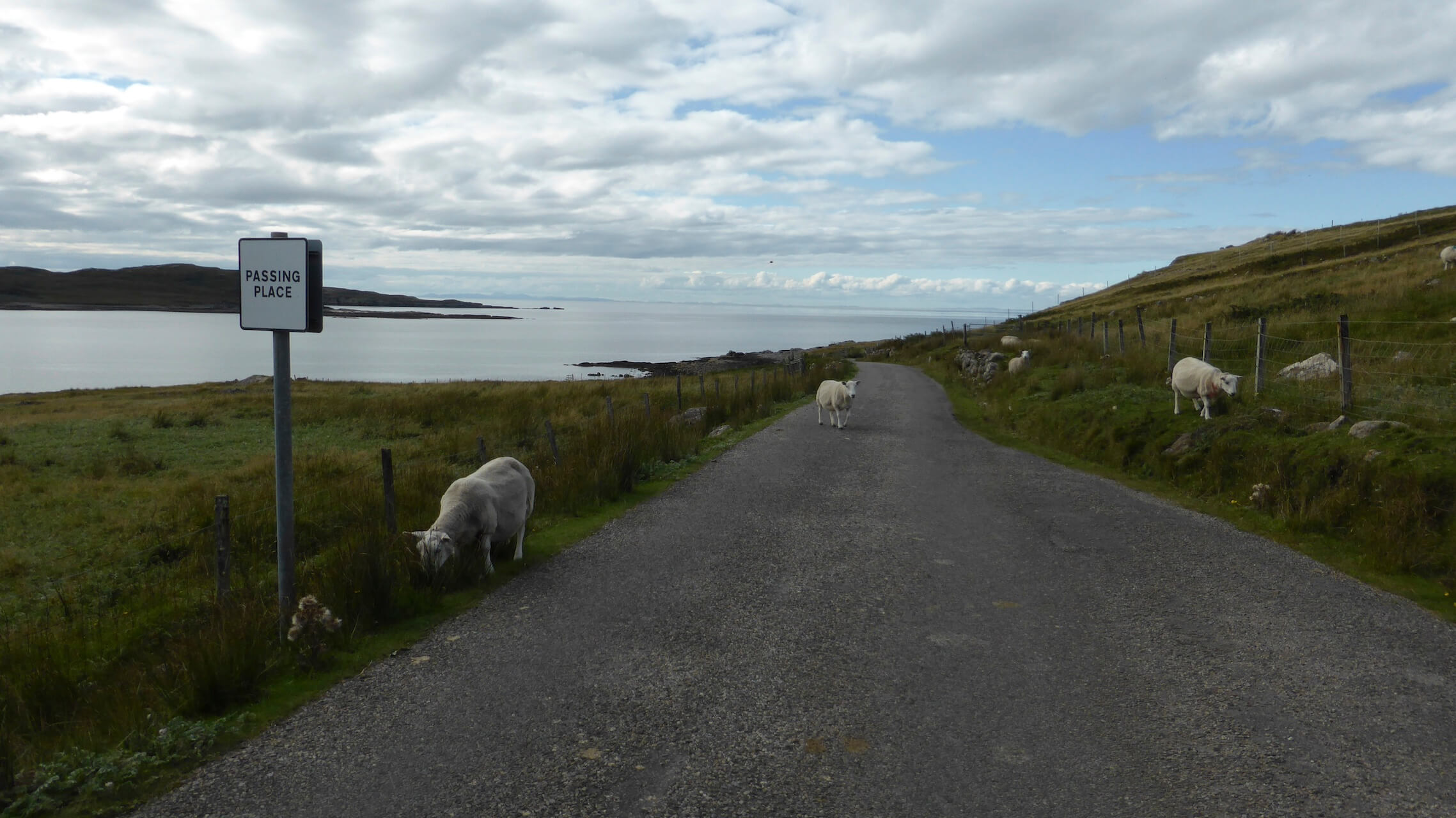 Sheep on a single track road north of Achiltibuie