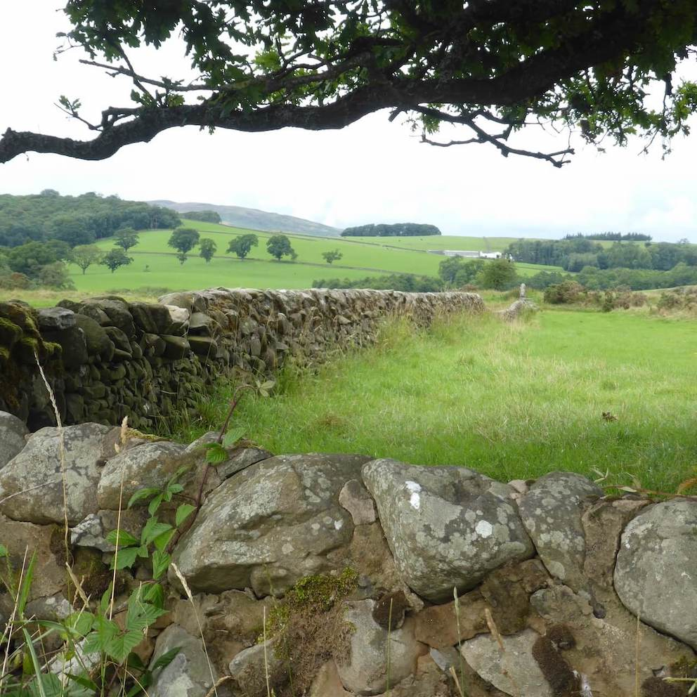 Rolling countryside with stone walls along the Glenkiln Loop in Dumfries and Galloway